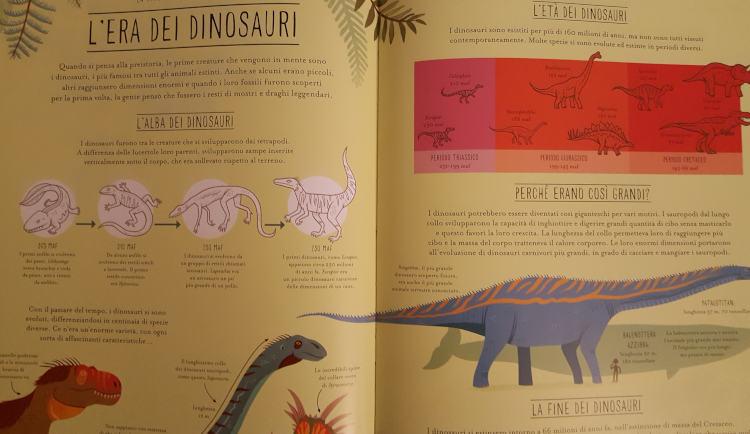 meravigliosa evoluzione